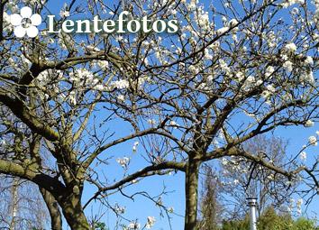 Lentefoto's